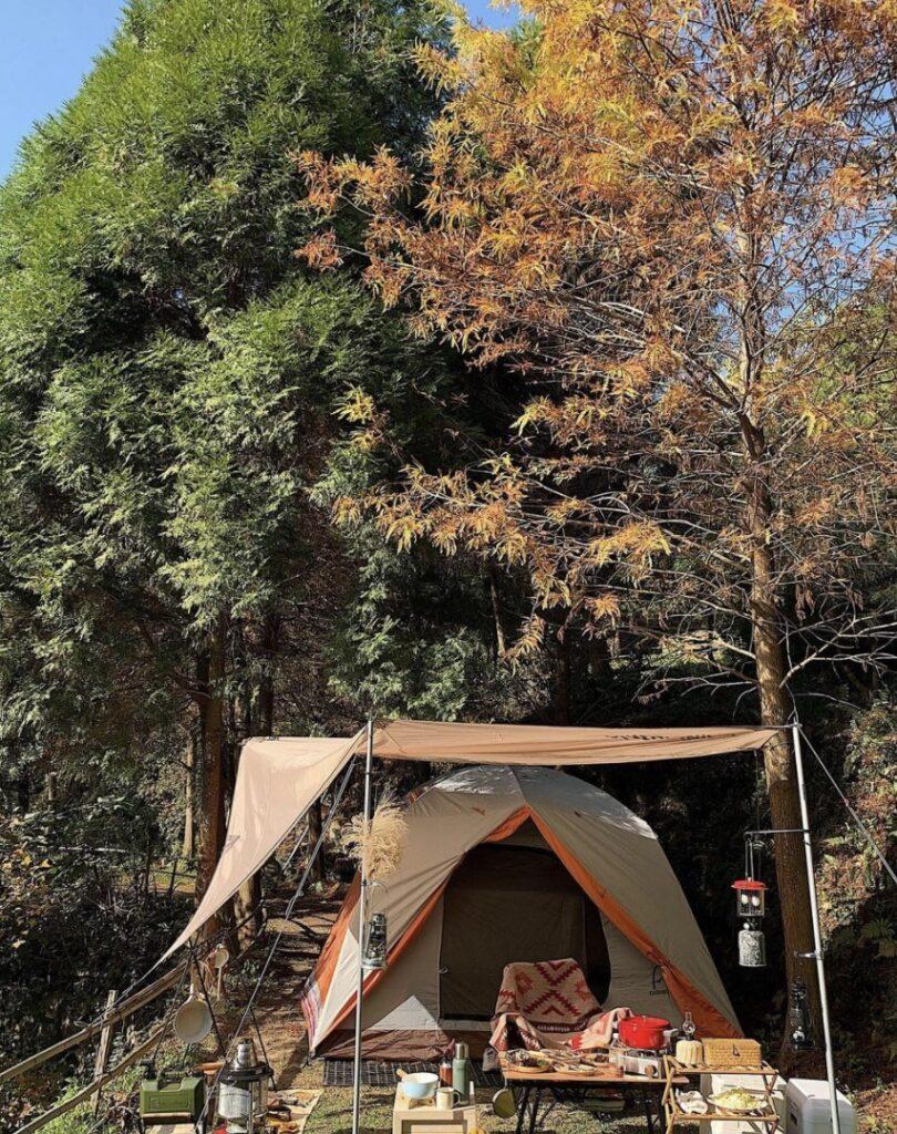 台中露營區推薦:希望之林